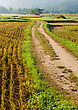 Dirt Track Road To Rice Field In Thailand stock photo