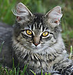 Kitty Domestic Cat Resting On The Grass stock photography