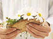 Don't Eat The Daisies stock photo