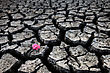 Drought Dried Up River Bed And Flower stock photo