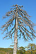 Dry Tree Vertical Picture. stock photo
