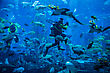 DUBAI, UAE - NOVEMBER 14: Huge Aquarium In A Hotel Atlantis On The Palm Islands. Diver Feeding Fishes. Dubai November 14, 2012 In Dubai, United Arab Emirates stock photography