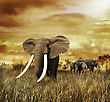 Elephants At Sunset ,Walking On The Grass stock photo