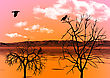 Evening Sky Reflected In Water And Ravens On Trees