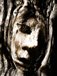 face in tree bark stock image