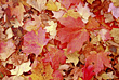 Fall Background stock photo