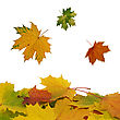 Fall Of Colorful Leaves stock image