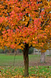 Fall Tree stock photography