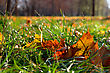 Fallen Colorful Leaves On The Bright Green Gras