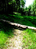 Fallen Tree Blocking A Path stock photo