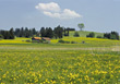 Farm in the Spring stock image