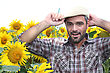 Farmer In A Sunflowers Field stock photography