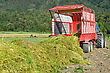 Feed Wagon Unloads Triticale Grown For Silage, West Coast, New Zealand