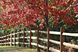 Fence in the Fall stock photography