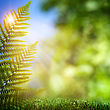 Fern. Abstract Natural Backgrounds With Beauty Bokeh stock photo