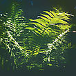 Fern Grass. Spring. Beauty Sunny Day In The Wild Forest stock image