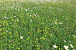 Field With Different Spring Flowers On A Carpet Of Green stock photography