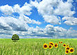Field Of Grass , Sunflowers And Beautiful Sky stock photo