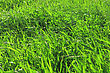 Field With Green Grass. Abstract Background For Your Design stock photo