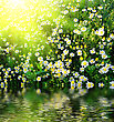 Fild Of Daisys And Fresh Green Grass Near Pond stock photo