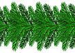 Fir Green Branches Isolated On White Background stock illustration