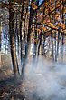 Fire In Wood stock photography