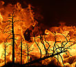 Fire In Wood stock image