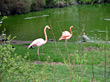 Flamingos Near A Pond stock photo