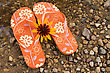 Synthetic Flip Flops And Yellow Flower Beside The River stock photo