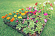 Flowerbed On Green Lawn. stock photography