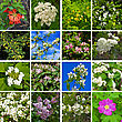 Flowers Of Acacia, Quince, Apple, Honeysuckle, Plum, Rowan, Viburnum, Lilac, Hawthorn, Wild Rose On A Background Of Green Leaves And Blue Sky stock image