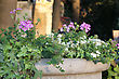 Flowers In A City Park. Flowers In Stone Vase At Sun Light stock photography