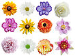 Flowers Collection Isolated On White Background stock image