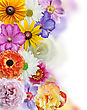 Flowers Collection On White Background stock photography