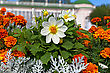 flowers in the park stock photography