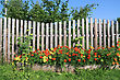 Cloudless Flowers Near Old Rural Fence stock image