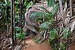 Footpath In National Park Of Seychelles stock photo