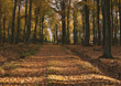 Forest Path in the Fall stock image