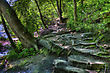 Forest And Worn Path In High Dynamic Range stock photo
