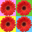 Four Red Daisies Isolated On Color Squares stock image