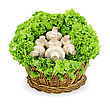 Fresh Appetizing Mushrooms In A Basket On A White Background.