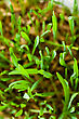 Fresh Grass, View From Above stock photo