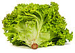 Fresh Green Lettuce Isolated On A White Background stock image