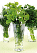 Fresh Herbs In Glasses stock photo