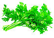 Flavouring Fresh Parsley On White Background. Isolated Over White stock photography