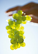 Fresh White Grapes stock photo