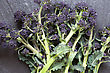 Freshly Picked Purple Sprouting Broccoli, Laid On A Slate Work Surface stock photo