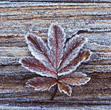 Frosted Leaf on Wood Background stock image