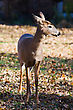 Full Front View Of A White Tailed Doe stock image