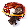Funny Playful Little Kittens stock image